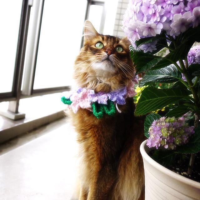 おはにゃん🐈素敵な週末を✨ ・ 予報では晴れて暑くなる週末…今のところ曇ってます😑 #ねこバカ #ねこのいる生活 #ねこすたぐらむ #ネコ部 #ニャンコ#にゃんこlove #ねこら部 #猫 #猫がいる幸せ #猫が好きすぎる #愛猫#花と猫#紫陽花#かぶりもの#もふもふ#cutecat #instacat #catlove#catstagram #petstagram #lovecat #hydrangea #flowerstagram