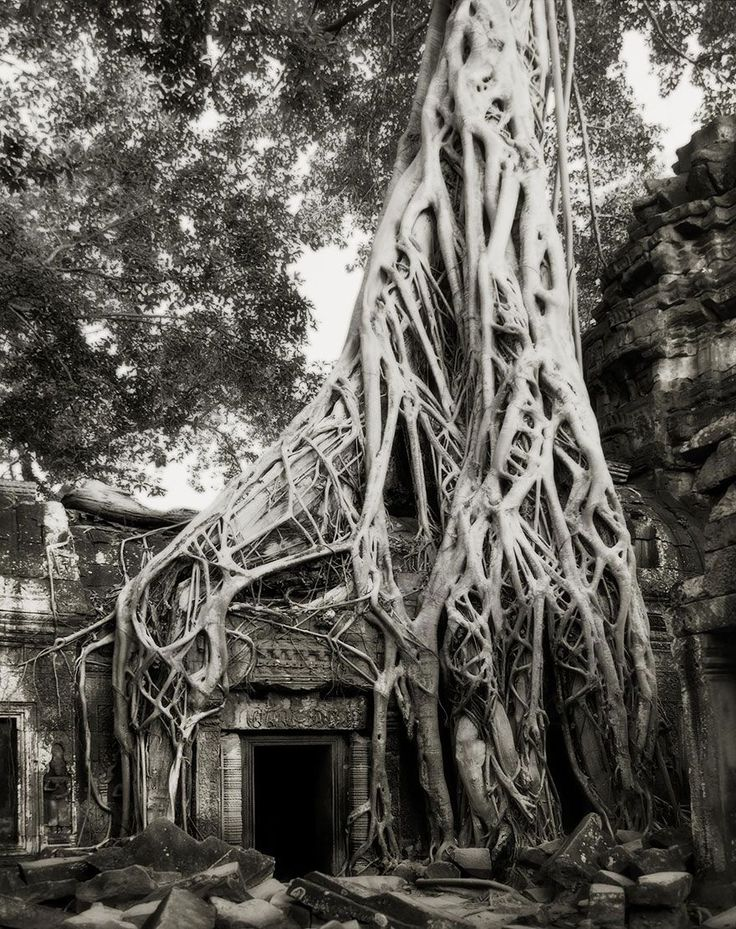 """from """"Ancient Trees: Portraits Of Time"""" by Beth Moon"""