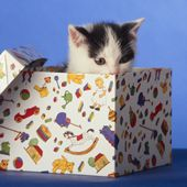 DO-IT-YOURSELF CAT TOYS: Cats, Cardboard Boxes, Doityourself Cat, Cat Love, Felin Pals, Diy Cat, Cat Toys, Cat Lady, Cardboard Fortress