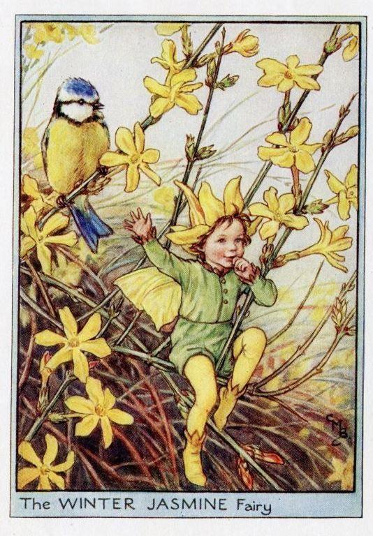 Winter Jasmine Flower Fairy Vintage Print, c.1950 Cicely Mary Barker-boekillustratie plaat