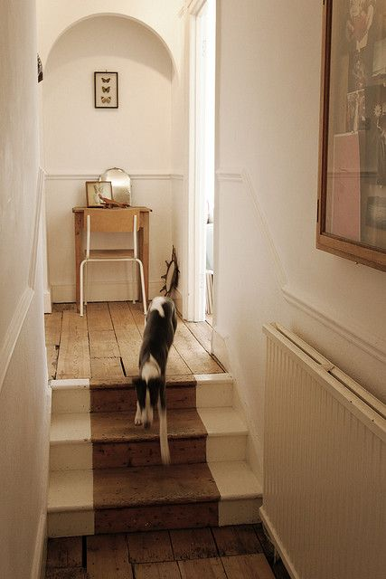 painted negative space stair runner on wood floors, hallway, dog, home, interior, wooden flooring