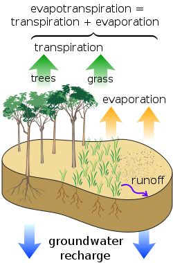 Surface water cycle - Evapotranspiration - Wikipedia