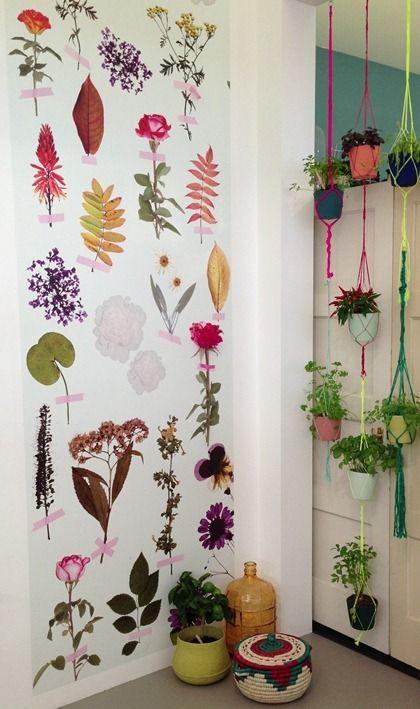 Stunning wallpaper and macrame hanging pots