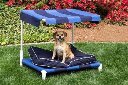 A smartly designed outdoor bed is a great place for your pooch to beat the heat!   Photo: Deborah Whitlaw Llewellyn