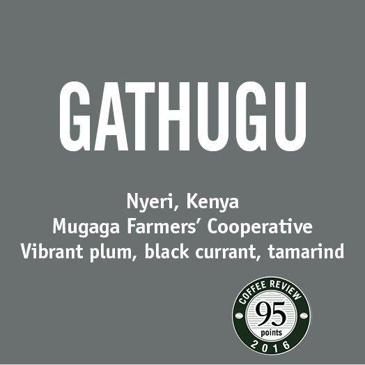 Gathugu   Coffee   Barrington Coffee Roasting Company