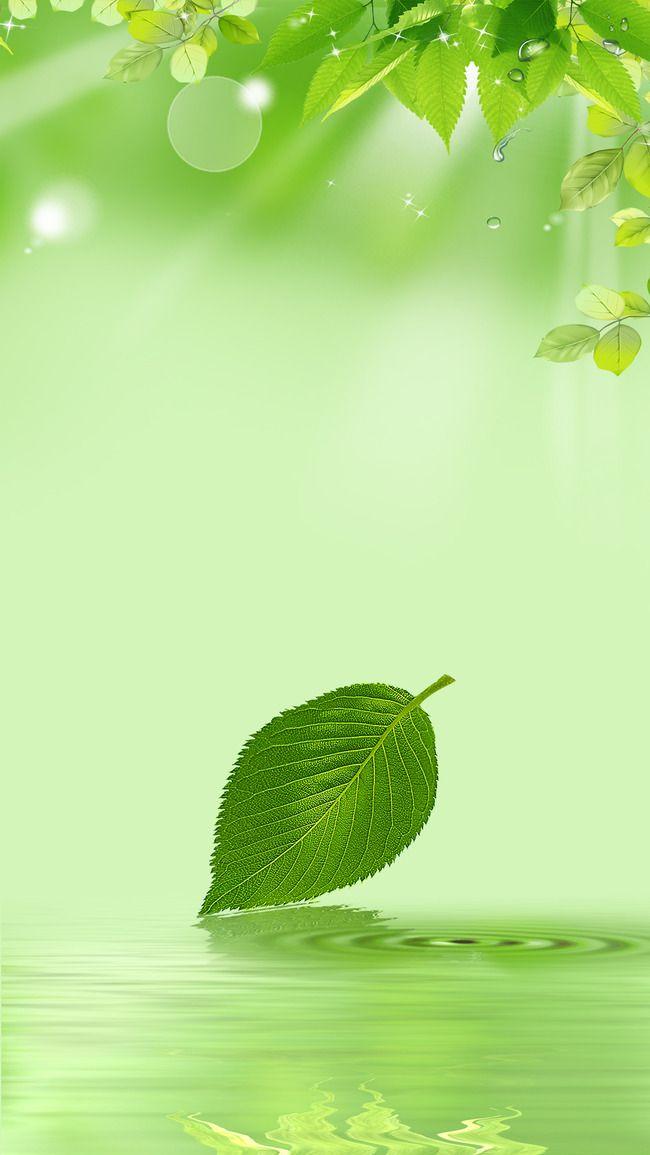 ورقة أوراق نبات الشتلة الخلفية Plant Seedlings Plants Seedlings
