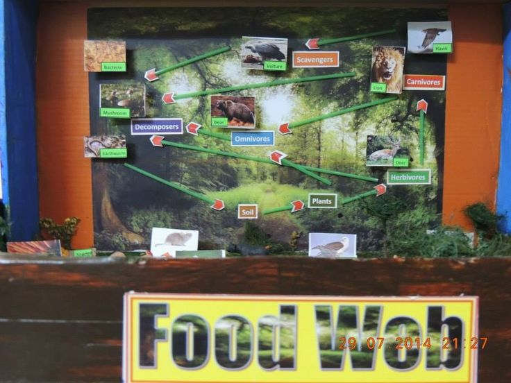 17 best images about food web model by chinmay on for Best out of waste models