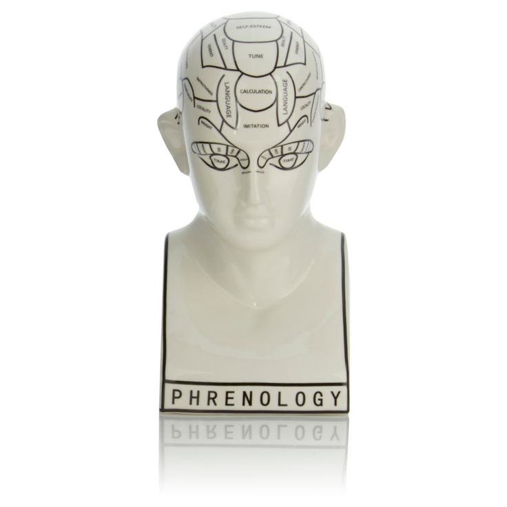 George home ceramic phrenology head