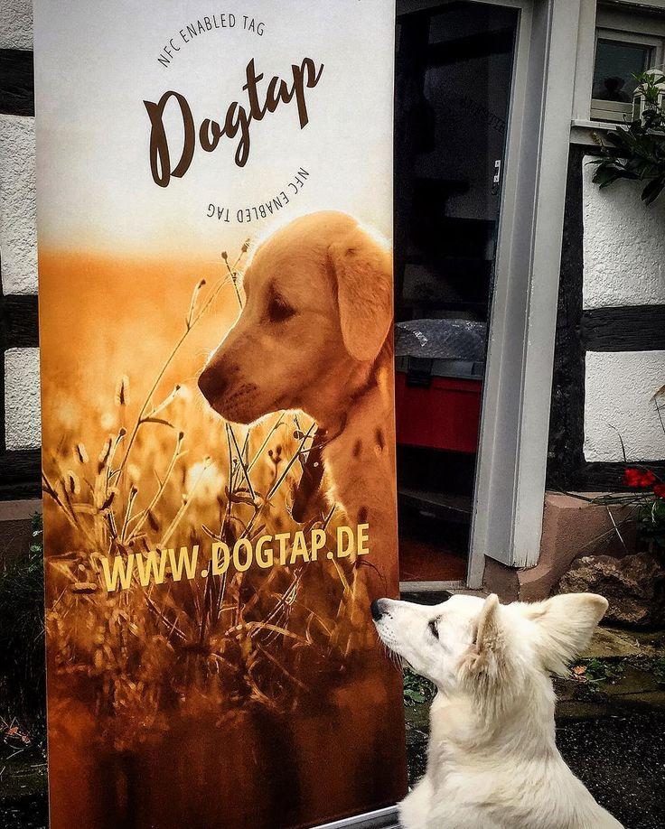 DOGTAP auf der Dortmunder Messe PFERD UND HUND mit der DEVK #pferdundhund #dortmund #dogtap #devk #messe #fair #dog_tap #2016 #hannah_ida_vdn #banner #check