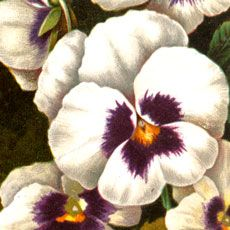 Today I'm sharing this Lovely White and Purple Pansies Image!This is a bunch of white and purple Pansies with green stems and green leaves. The dark background makes the flowers look extra striking I think.  So nice to use in your Craft or Collage Projects! Have you joined our Premium Membership Site yet? For...Read More »
