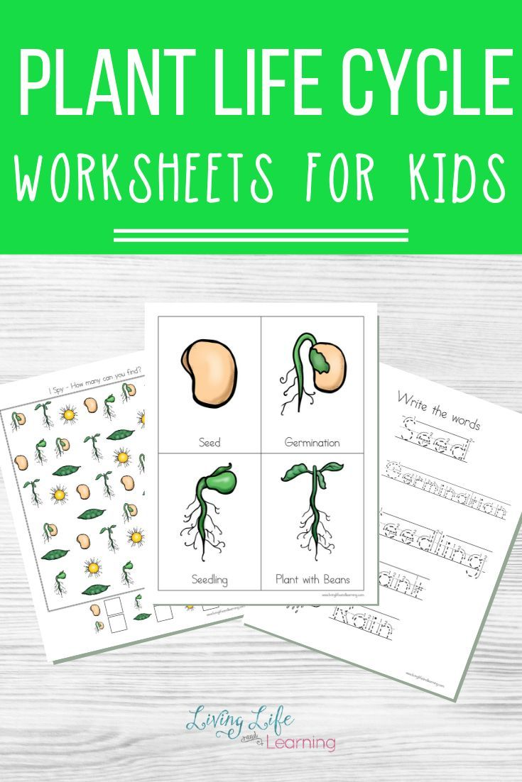 Plant Life Cycle Worksheets Plant Life Cycle Worksheet Plant Life Cycle Life Cycles [ 1102 x 735 Pixel ]