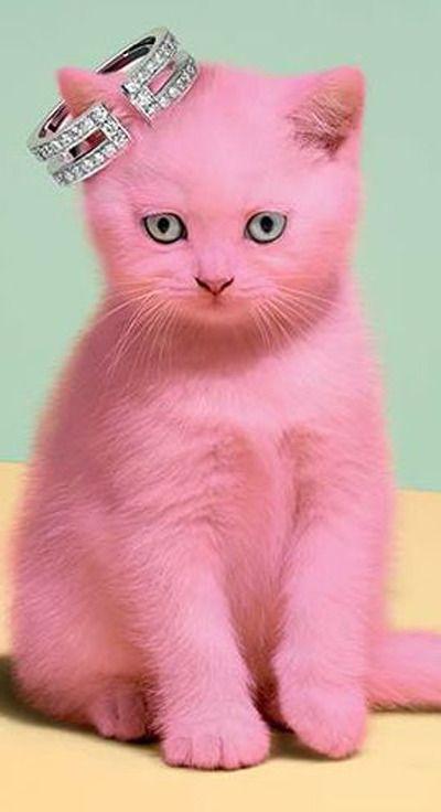 часто розовая кошка картинка третий отель оренбурге