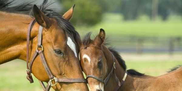 petition: Demand an end to the horse meat factories