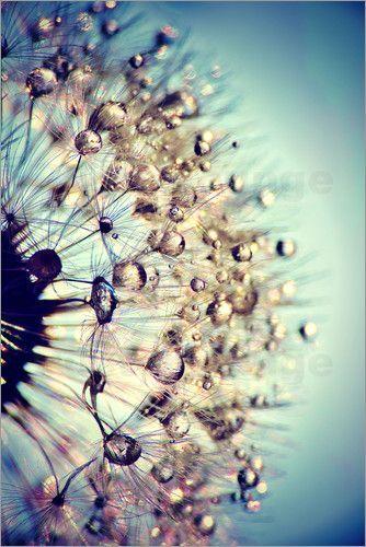 "ollebosse: ""  Julia Delgado - Dandelion Blue Crystal """