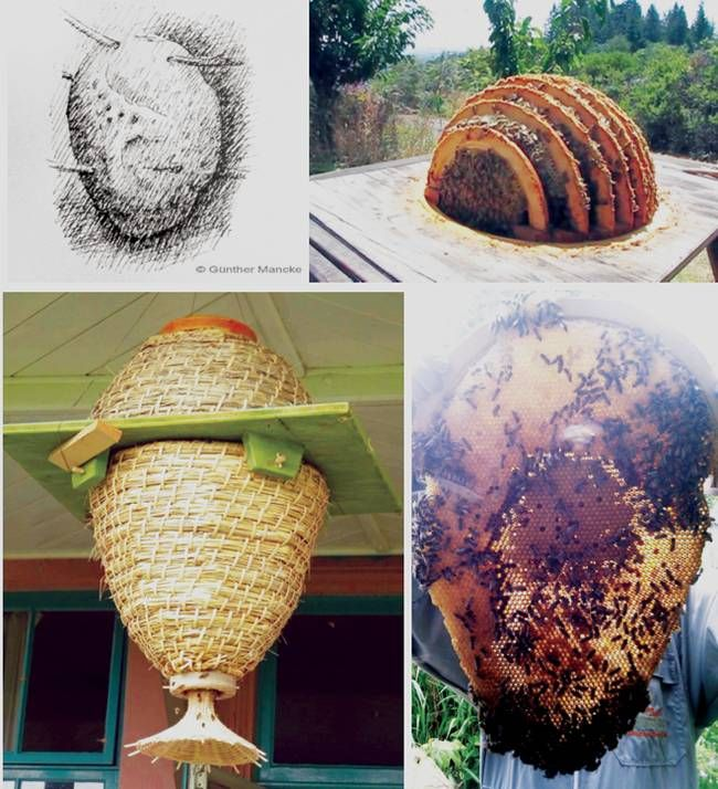"Made with ""bee-centred"" apiculture and conservation in mind, the Sun Hive is an alternative format for natural beekeepers. Created by German beekeeper and sculptor Guenther Mancke, the Sun Hive is a based on the form of hives as found in the wild. 