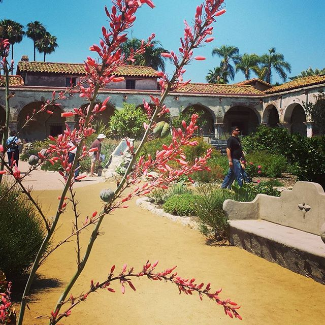 Summer in bloom. #sanjuancapistranomission #gardensofinstagram #visitcalifornia #history #droughttolerant
