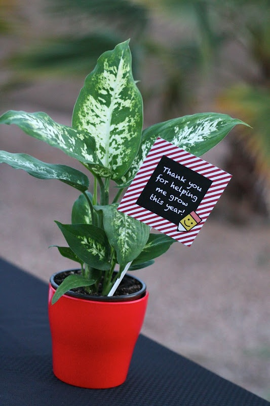 Teacher's Gift Idea   A to Zebra Celebrations