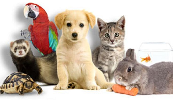 animaux-de-compagnie.jpg (1084×630)