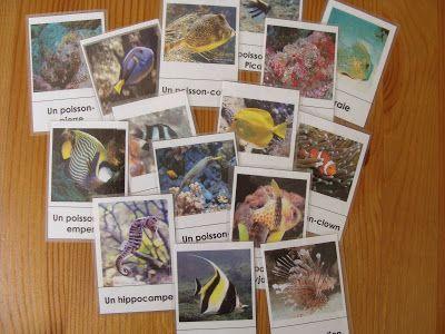 Au fil des jours: Cartes des poissons