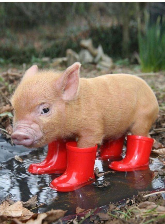 Popolare 39 migliori immagini AnimaliSUIDI su Pinterest | Animali, Regno  EN13
