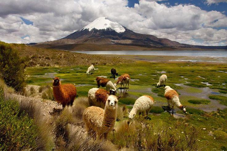 Parque Nacional Lauca, Región de Arica y Parinacota/Norte de Chile