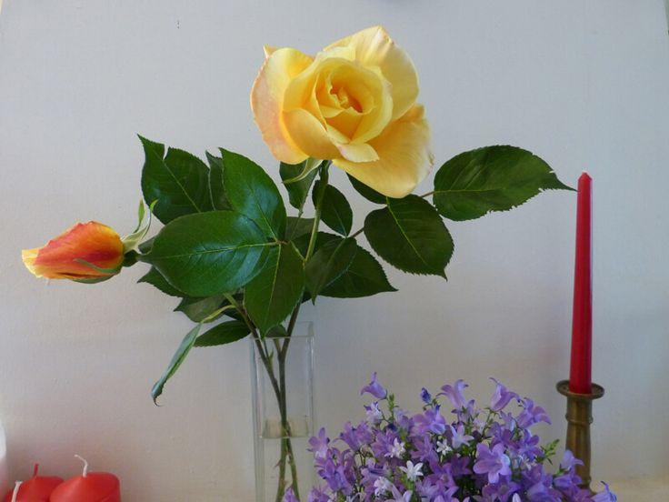 Rózsa és harangvirág