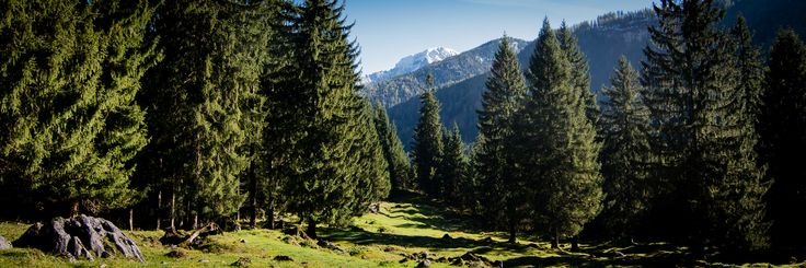Deutschland - Bayern - Berchtesgaden - Wald und Berge