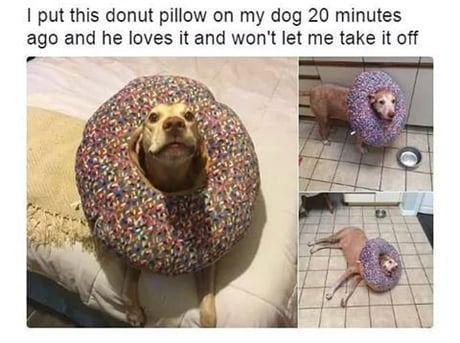 20 Best Funny Animal Photos for Wednesday Night