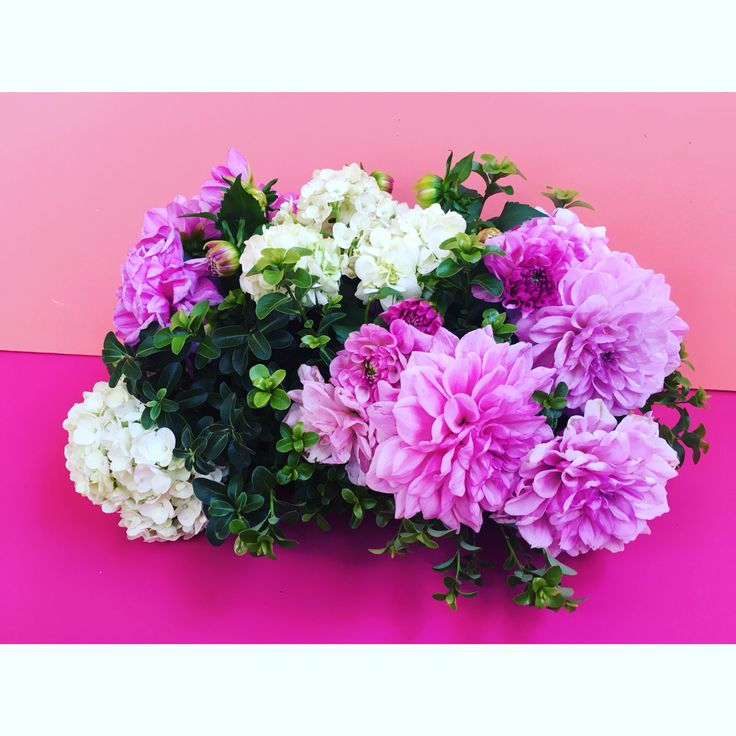 Table centerpiece by Bettie bee blooms. Box hedge, pink dahlias, white hydrangea.