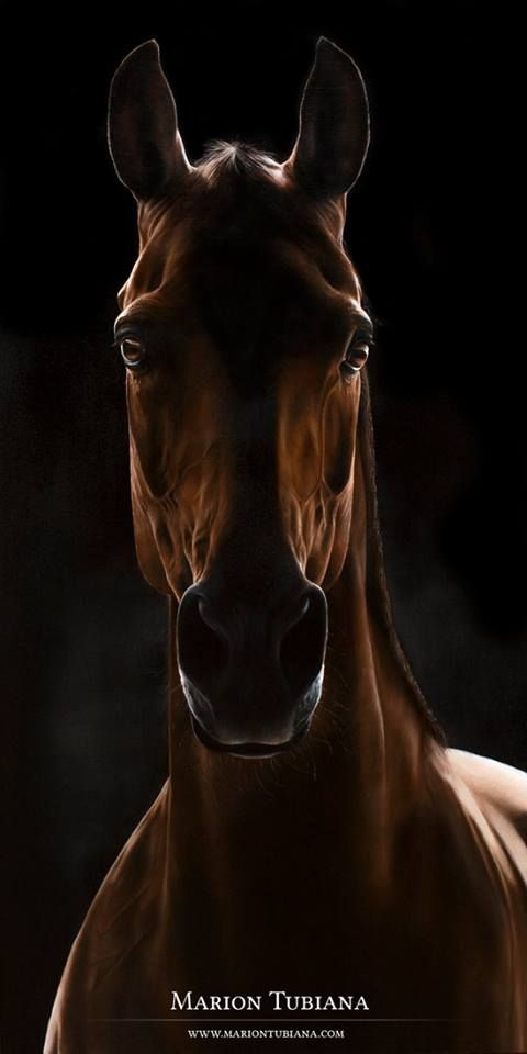 Gorgeous horse in the shadows. Awesome horse photography. Marion Tubiana