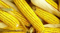 How to Grill Corn on the Cob on the Big Green Egg | eHow