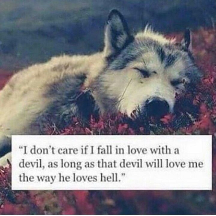 #love #wolf                                                                                                                                                      More