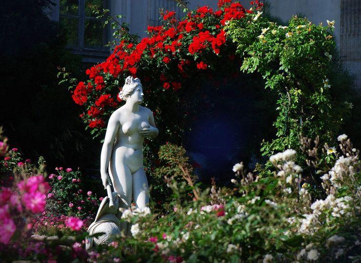 V nus g nitrice roseraie du jardin des plantes de for Plante et jardin catalogue