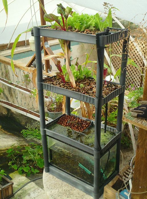 1000 images about gardening on pinterest gardens for Balcony aquaponics