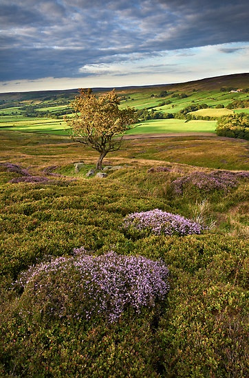North Yorkshire Moors, England.