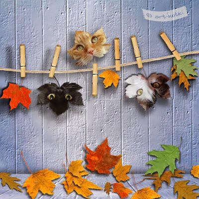 Kocie liście