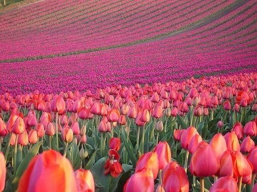 Bienvenida #Primavera #Spring