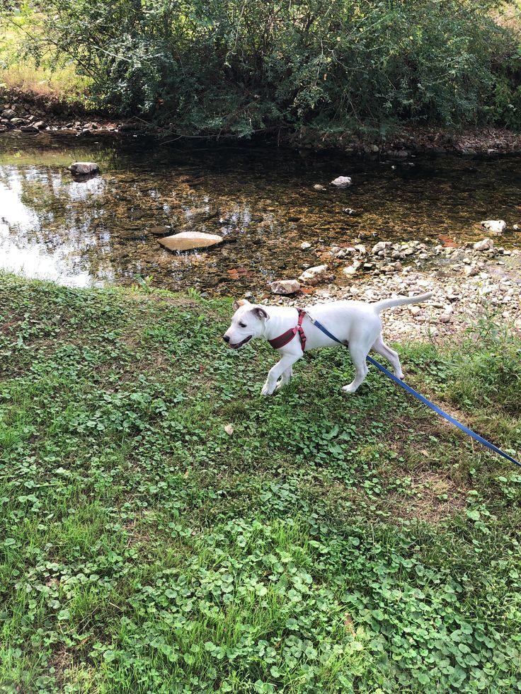 What kind of dog did I adopt? I named him Casper!