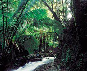 Melba Gully, Attraction, Great Ocean Road, Victoria, Australia