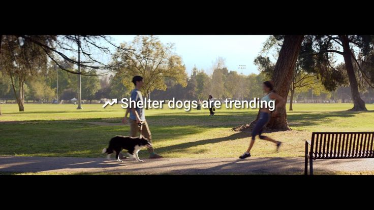 The idea is to really register every dog under a trending topic name, so we help increase online exposure when people are searching for trends on Goog