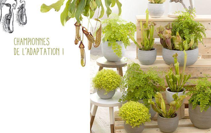 17 meilleures id es propos de plantes carnivores sur pinterest dion e plante carnivore et. Black Bedroom Furniture Sets. Home Design Ideas