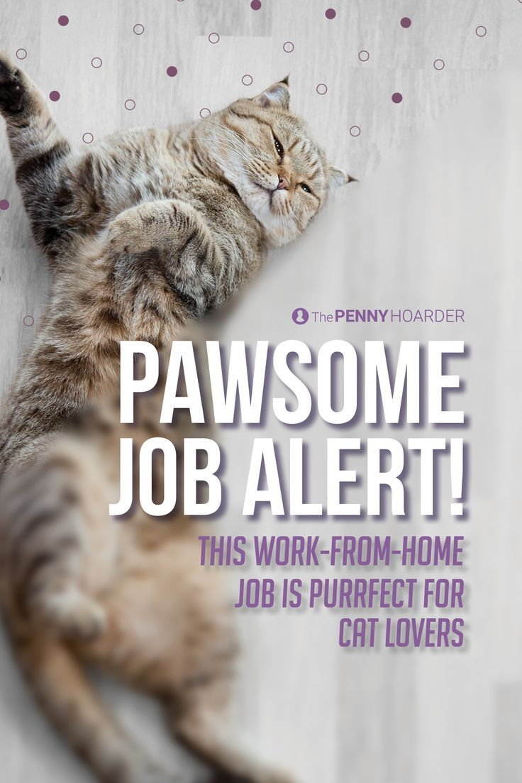 Consider yourself a cat lover? Well, you can finally capitalize on your useless obsession. This popular cat site needs a research assistant, and the pay's purrty paw-some!