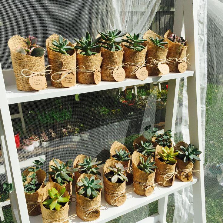 17 Best Images About Wedding Favours Idea, Succulents