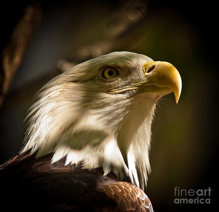 53 best images about fine art america on pinterest lakes bald eagle and get a grip. Black Bedroom Furniture Sets. Home Design Ideas