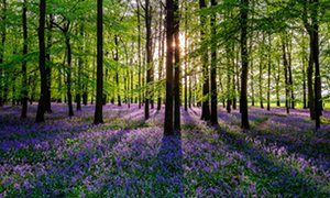 just like bluebells..you fill up my senses:) were you bluebells in your previous life?