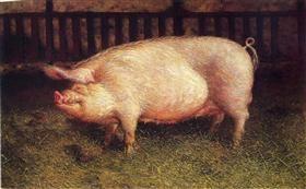 Portrait of Pig - Jamie Wyeth