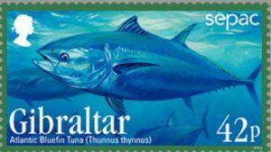 Atlantic Bluefin Tuna (Thunnus thynnus)