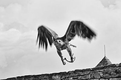 bwstock.photography - photo | free download black and white photos  //  #eagle