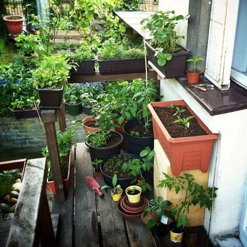 Co pěstovat