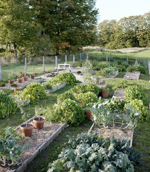 The backyard garden yields enough heirloom edibles — tomatoes, broccoli, chard, cucumbers, and more — to supply Case's kitchen and a local restaurant.   - CountryLiving.com